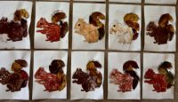 Wiewiórki – technika kombinowana, malowanie pastelami iwyklejanie ogona zasuszonymi liśćmi