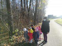 Listopadowy spacer – obserwacja drzew