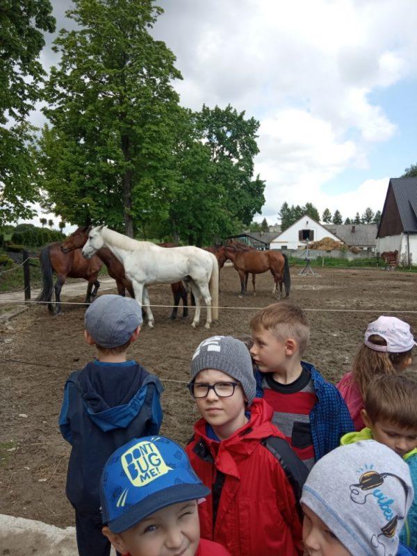 Wycieczka dostadniny koni