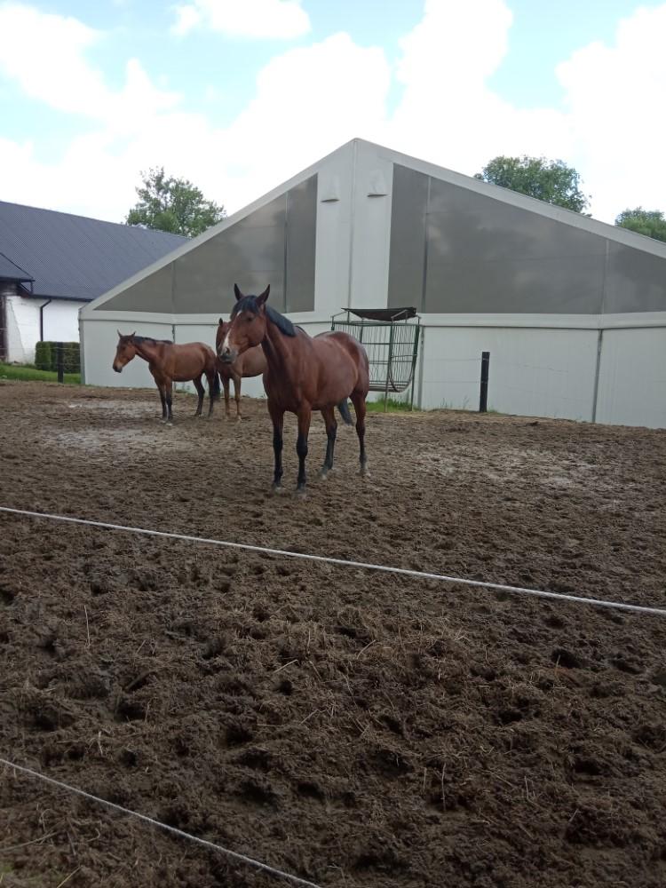 Wycieczka do stadniny koni
