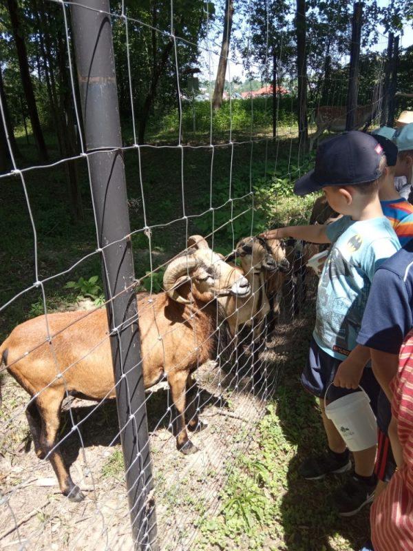 Wycieczka dogospodarstwa agroturystyczneg Owieczka