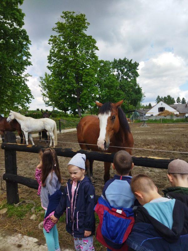 Wycieczka dostadniny koni wNawojowej