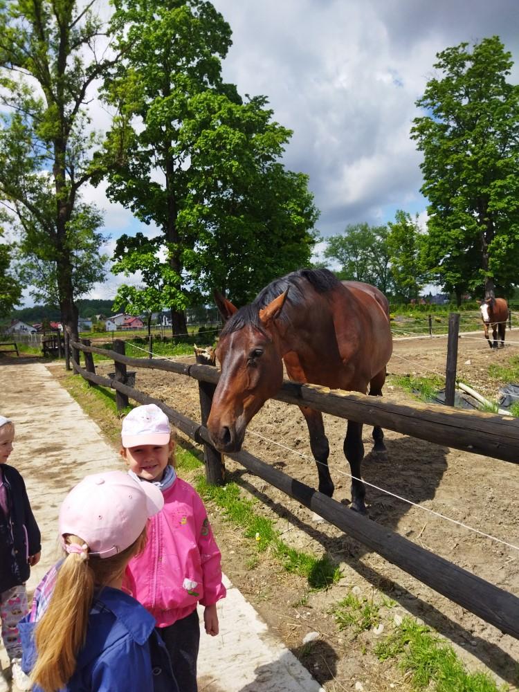 Wycieczka do stadniny koni w Nawojowej
